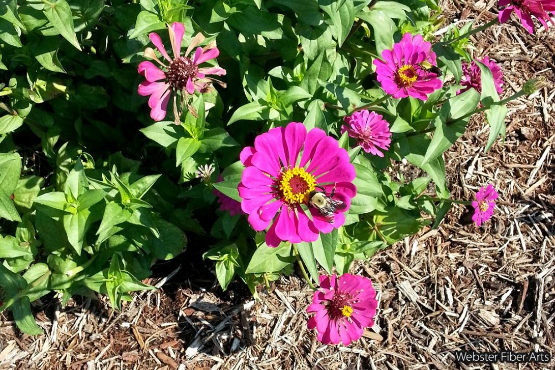 Riverbanks Garden Flowers   Webster Fiber Arts