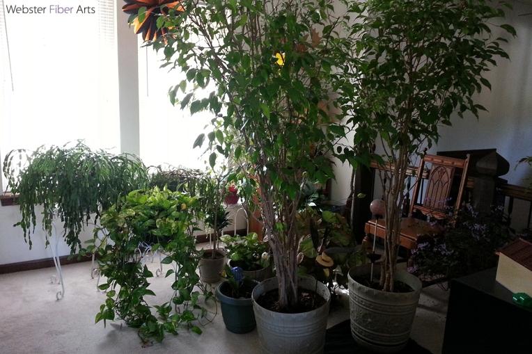 Our Houseplants   Webster Fiber Arts