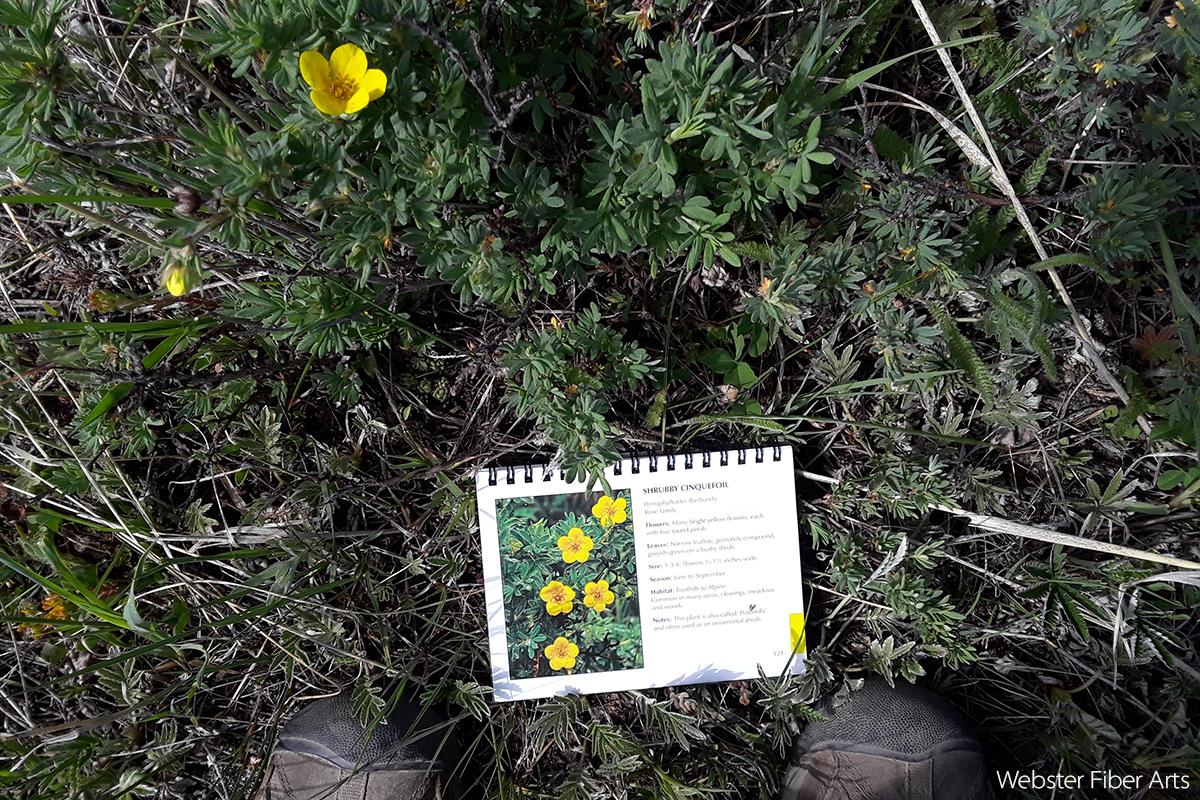 Flower ID in RMNP | Webster Fiber Arts